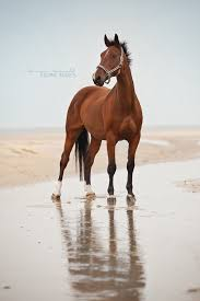 professional horse face photography. Contemporary Photography Lavus By Carinamaiwald  Inside Professional Horse Face Photography M
