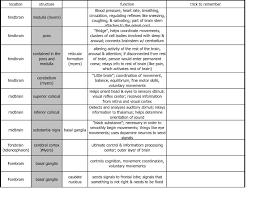 40 Cogent Brain Structure Function Chart