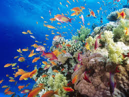 colorful coral reef wallpaper. Colorful Coral Reef Wallpaper HD MFX To