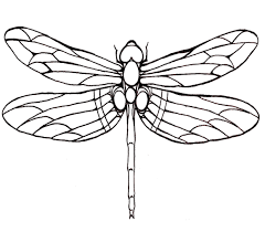 Luxury Inspiration Dragonfly Coloring Pages Dragonfly Large Winged