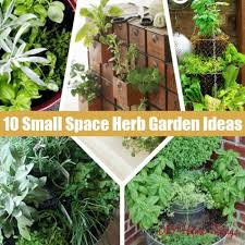 Small Picture 15 best vegetables that grow well in a container or pot assemble