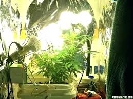 indoor grow setup closet room kit photos forums measured her out today a full