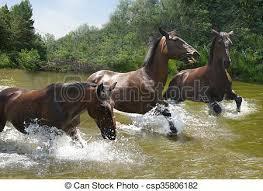 wild horses galloping.  Wild Herd Of Horses Galloping On The Wat  Csp35806182 On Wild Horses Galloping