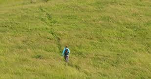 tall green grass field. Lone Female Hiker Walks Across A Field With Tall Green Grass. Slow Motion, Extreme Grass