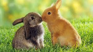 Cute Animals HD wallpaper