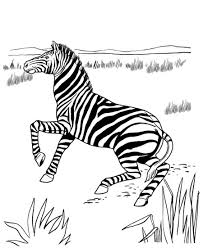 These are calm and serene animals that are often found grazing in meadows and grasslands. Printable Zebra Coloring Pages Coloringme Com