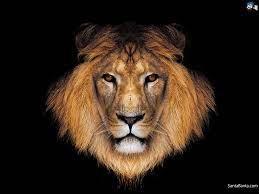 48+] Lion HD Wallpapers on WallpaperSafari