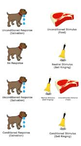 Example Of Classical Conditioning Neutral Stimulus Wikipedia