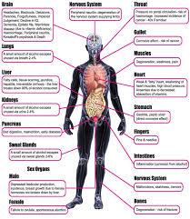 Emotional Pain Body Chart Bedowntowndaytona Com