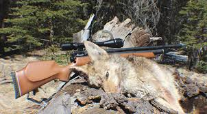 Airgun Fpe Chart Hunting With Airguns The Blog Of The 1800gunsandammo Store