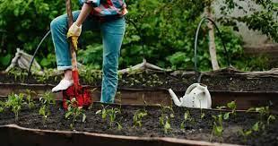 good soil for your vegetable garden