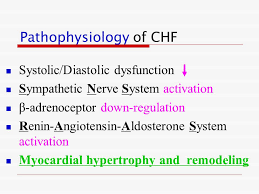 Pathophysiology Of Chf Drugs For Congestive Heart Failure Ppt Video Online Download