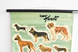 Dog Chart Mid Century Roll Down Dog Breeds Chart From Hagemann 1960s