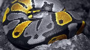 cute snake wallpaper. Unique Cute In Cute Snake Wallpaper