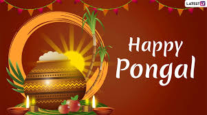 Happy Pongal 2020 Wishes: WhatsApp ...