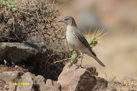 oiseau Martin 25 janvier trouvé par Ajonc Images?q=tbn:ANd9GcSlvuIWT8MBOEiw5ysP71w9Ke50_C-9byti2Q&usqp=CAU