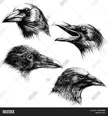 Crow Head Drawing Line Work Vector рисование идеитехникиприемы