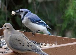 Birding For Kids Resource Guide  Birding With Children Tips On Backyard Bird Watch