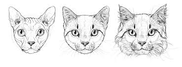 cat drawing step by step. Exellent Cat How To Draw A Cat Head Step By Intended Cat Drawing Step By W