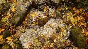 myth moor autumn color autumn color 3