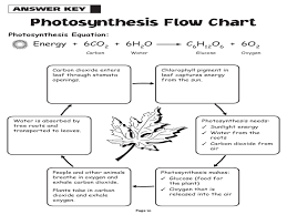 Cell Energy Flow Chart Photosynthesis And Cellular Respiration Answer Key Photosynthesis Diagrams Worksheets Answers Photosynthesis