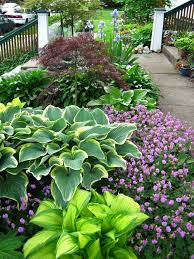 Small Picture Beautiful border for filtered light or partial shade Hostas