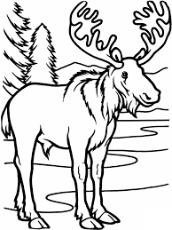 Small Picture Moose Coloring Pages Coloring Page