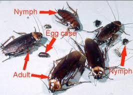 The American Roach Pest Cemetery
