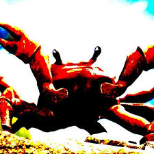 crab rave b boosted by meltedspoon420 free listening on soundcloud
