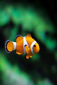 Image result for ocean beauty one fish