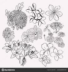 コレクション花植物セット白黒イラスト ストックベクター Margolana