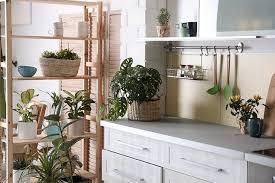 Una grande pianta da interni impreziosisce i tuoi interni. 10 Piante Da Interno Come Prendersene Cura