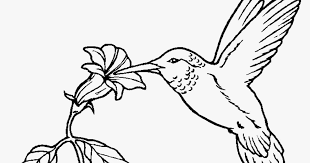 Small Picture Hummingbird Coloring Pages