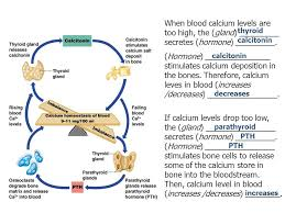Calcium Homeostasis Flow Chart Awesome How A Negative