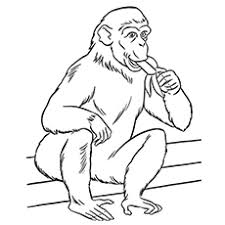 zoo cage coloring page. Plain Coloring Themonkeyeatingbanana In Zoo Cage Coloring Page D