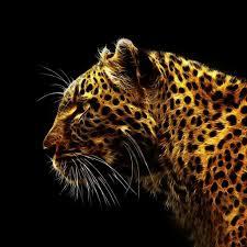 leopard ipad wallpapers
