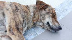 Dog Sleep Pattern Simple Dog Color Pattern Sleeping Tile Stock Video © Weerameth 48