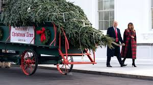 The White House Christmas tree was plucked from the North Carolina mountains. A \u0027Cinderella story\u0027: How this year\u0027s