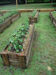 strawbale gardening neater than other strawbale gardens i ve seen kind of a cross between straw bale and permanent traditional raised beds yard