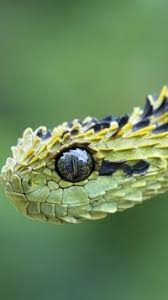 cute snake wallpaper.  Cute Animal Snake Reptiles Snakes Mobile Wallpaper Throughout Cute S