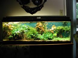 10 Gallon Fish Tank Stand Ideas For Your Aquarium