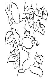Kleurplaat Eekhoorntjes 1 Kopen Zippytoys