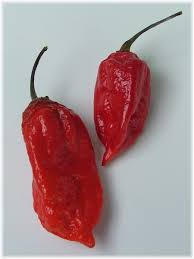 John Scheepers Kitchen Garden Seeds Spice It Up With Chile Peppers