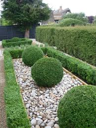 Small Picture Topiary balls lillydale topping and lonicera hedge 44 McArthur