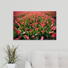 >greatbigcanvas red tulip field in amsterdam netherlands by scott  greatbigcanvas red tulip field in amsterdam netherlands by scott stulberg canvas wall art