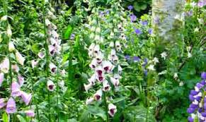 Small Picture Wedding Plant Gift Lists by Professional Garden Designer in Dorset