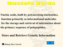 Functions Of Nucleic Acids Structure And Function Of Nucleic Acids