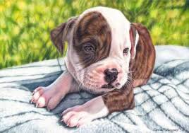 bulldog puppy drawing. Wonderful Puppy Saatchi Art Artist Ewelina Kuczera Drawing U201cAmerican Bulldog Puppyu201d Art On Puppy Drawing O