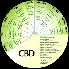 Cbd Chart What Are The Benefits Of Cbd Crystals Quora