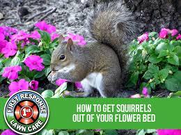get squirrels out of garden